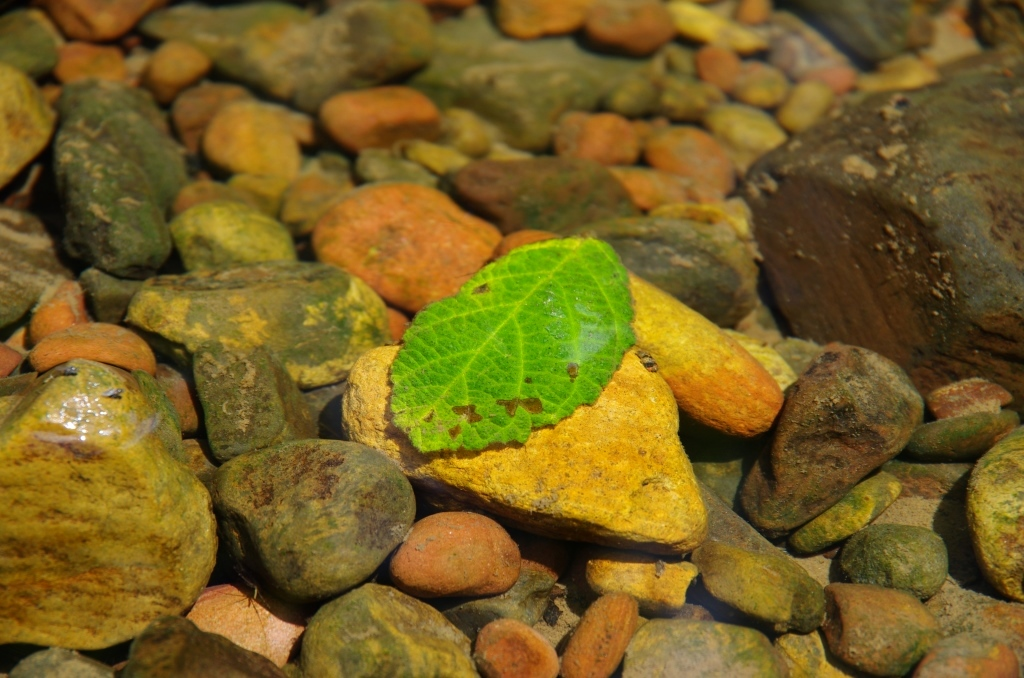 Stone in creek