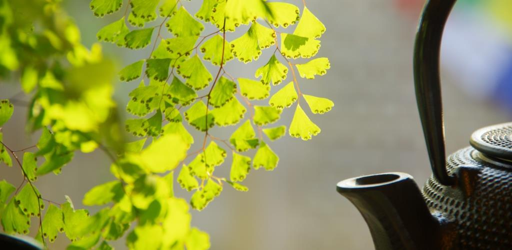 Maidenhair and tea pot