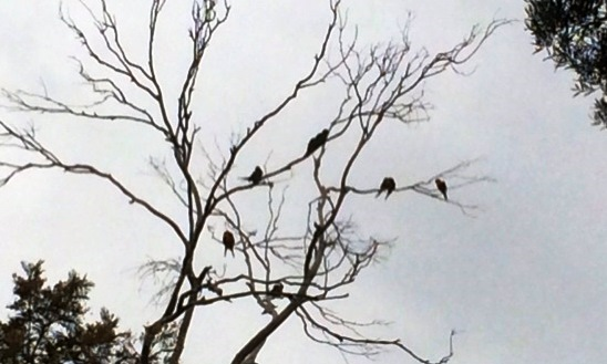 Birds in tree.jpg2